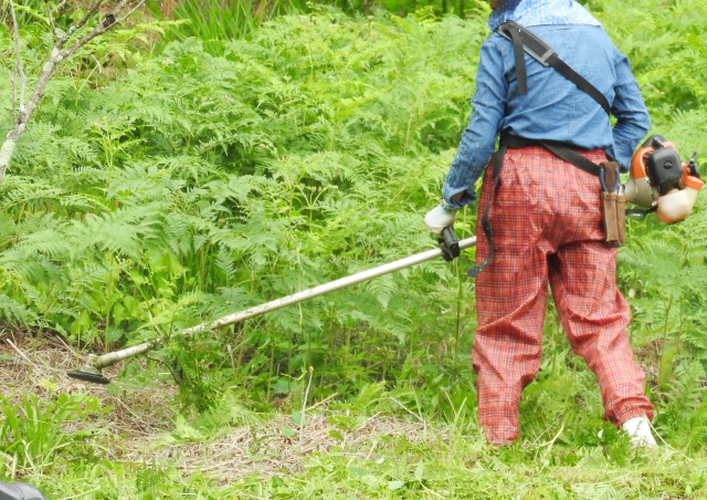鳥取市で草刈りにかかる料金相場は?追加料金や業者選びのコツまで解説