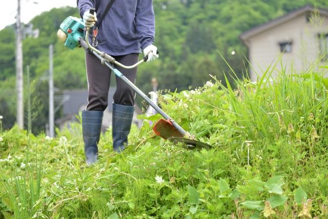 鳥取市で草刈りに最適な年3回の時期~楽に草刈りを終えるコツまで徹底解説